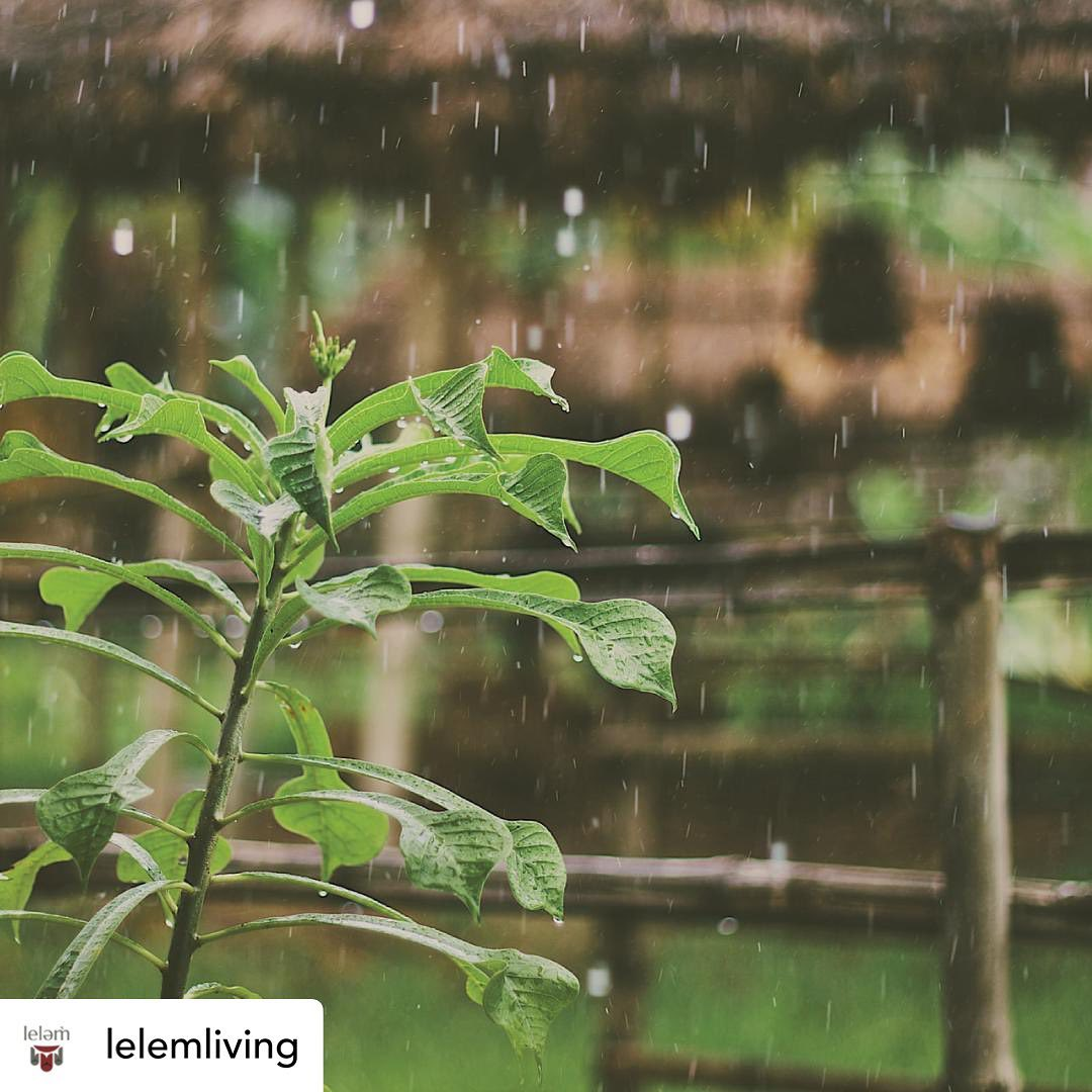 Repost from @lelemliving: leləm̓ reflects deep-rooted Musqueam values of environ